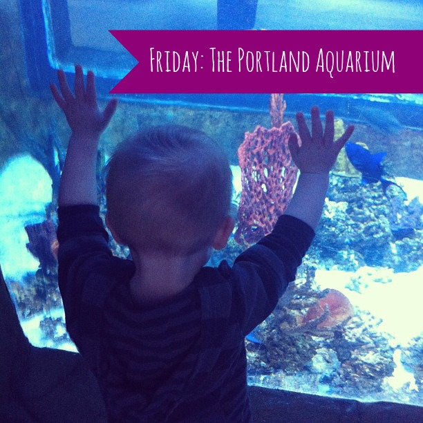 {Weekend in Review} Petting fish, Packing, & Prepping
